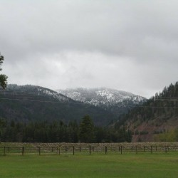 Spring Coming To Montana
